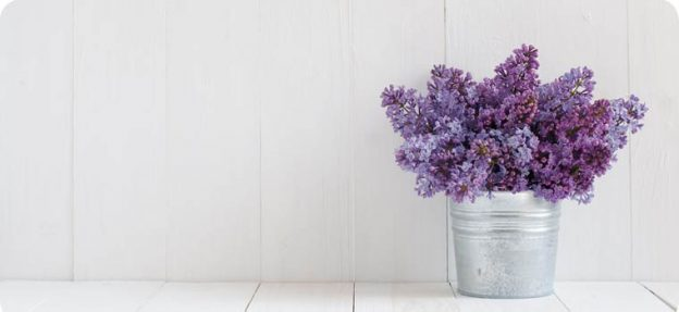 silver tin of lilacs against a white wall, on a white plank floor