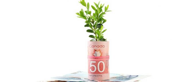 seedling wrapped in 50 dollar canadian bill
