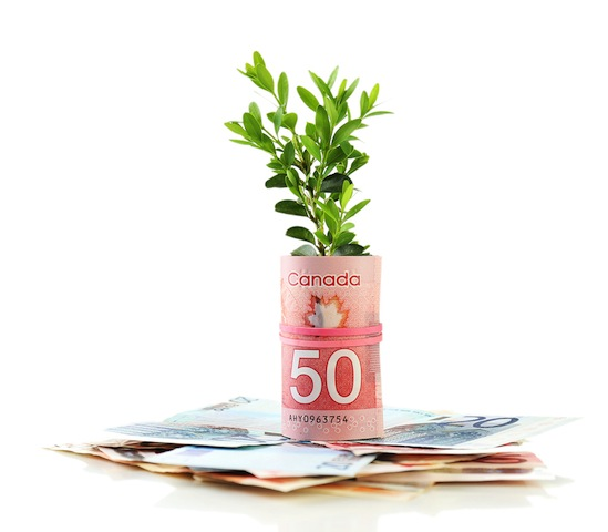 Canadian money roll surrounding green plant